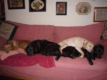 At home she has to share. To her right is Inca, my son Ben's dog. To Inca's right is Lola, her daughter, my daughter Tamara's dog and on top of Lola is Lola's daughter Marnie, also Tamara's.